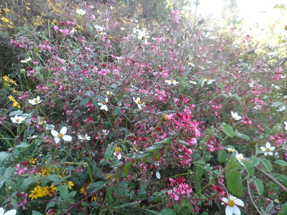 Wild-flowers-cerro-quemado-hike