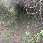 path-cerro-quemado-hike-quetzaltenango