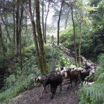 path-hike-volcan-santiaguito-guatemala